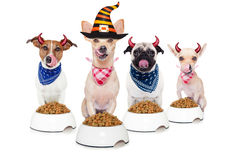 Perros de diablo de Halloween hambrientos para la comida Foto de archivo libre de regalías