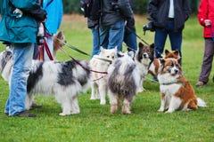 Perros de Elo en un lugar del perro fotografía de archivo