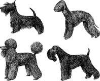 Perros de juguete Imagenes de archivo