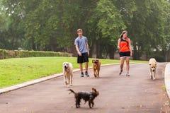 Perros de la calzada del muchacho de la muchacha Foto de archivo libre de regalías