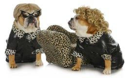 Perros de la diva Foto de archivo