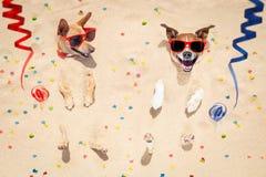 Perros de la Feliz Año Nuevo en la playa Fotos de archivo