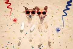 Perros de la Feliz Año Nuevo en la playa Imagen de archivo