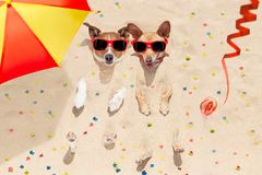 Perros de la Feliz Año Nuevo en la playa Imagen de archivo libre de regalías