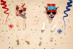 Perros de la Feliz Año Nuevo en la playa Fotografía de archivo libre de regalías