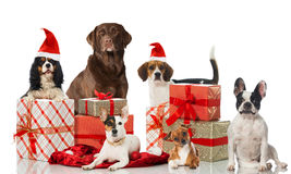 Perros de la Navidad Imagen de archivo libre de regalías
