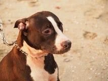 Perros de la playa imagen de archivo libre de regalías