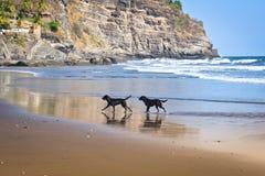 Perros de la playa imagen de archivo