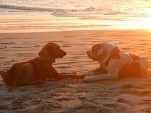 Perros de la playa en la puesta del sol Fotografía de archivo