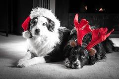 Perros de la tarjeta de Navidad foto de archivo libre de regalías