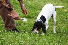 Perros de la trufa de la raza Fotografía de archivo