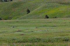 Perros de las praderas en la pradera fotografía de archivo
