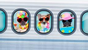 Perros de las vacaciones en aeroplano Fotografía de archivo libre de regalías