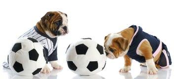 Perros de los deportes Imagen de archivo libre de regalías