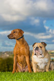 Perros de los mejores amigos Fotos de archivo libres de regalías