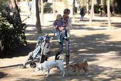 Perros de observación del bebé y de la madre en un parque imagen de archivo