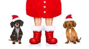 Perros de Papá Noel el días de fiesta de la Navidad Foto de archivo libre de regalías