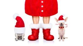 Perros de Papá Noel de la Navidad Fotos de archivo
