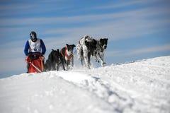 Perros de trineo en competir con de la velocidad Foto de archivo