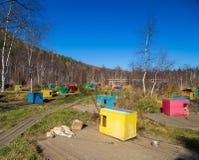 Perros de trineo multicolores de la cabina Imágenes de archivo libres de regalías