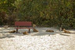 Perros de una calle cerca del banco rojo en la sombra en la arena blanca en el fondo de arbustos fotos de archivo libres de regalías