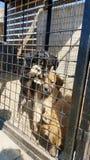 Perros del bebé en un refugio Fotos de archivo libres de regalías