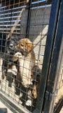Perros del bebé en un refugio Imagen de archivo libre de regalías