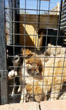 Perros del bebé en un refugio Fotos de archivo