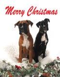 Perros del boxeador de la Navidad Foto de archivo