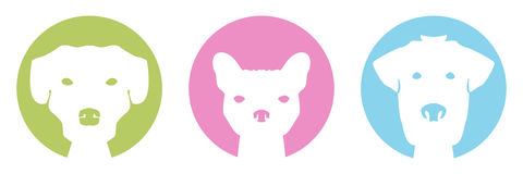 Perros del color Imágenes de archivo libres de regalías