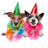 Perros del cumpleaños Fotos de archivo