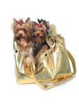 Perros del encanto Fotos de archivo