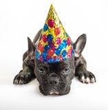 Perros del partido Fotografía de archivo libre de regalías