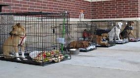 Perros del rescate Imagenes de archivo