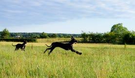 Perros divertidos Foto de archivo