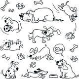 Perros divertidos Imágenes de archivo libres de regalías