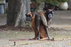 Perros divertidos imagen de archivo