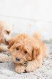 Perros divertidos en la arena Fotografía de archivo
