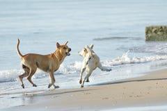Perros divertidos en la playa Imagen de archivo