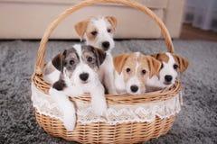 Perros divertidos lindos en cesta de mimbre imagenes de archivo
