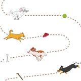 Perros divertidos que persiguen el modelo de los artículos Foto de archivo libre de regalías