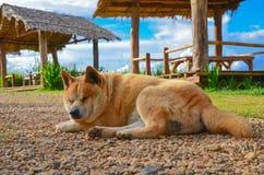Perros el dormir Fotos de archivo libres de regalías