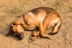 Perros el dormir Fotografía de archivo libre de regalías