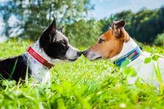 Perros en amor fotografía de archivo libre de regalías