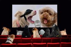 Perros en el cine que mira una película de la música fotos de archivo
