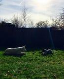 Perros en el jardín grande y pequeño Fotos de archivo libres de regalías