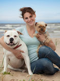 Perros en el mar Fotografía de archivo libre de regalías