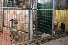 Perros en el refugio Foto de archivo