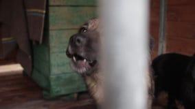 Perros en el refugio para animales, perros en el recinto para los perros almacen de video
