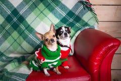 Perros en el sofá Fotografía de archivo libre de regalías